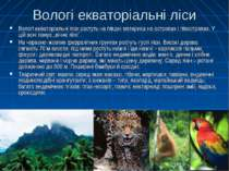 Вологі екваторіальні ліси Вологі екваторіальні ліси ростуть на півдні материк...