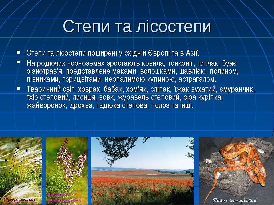 Степи та лісостепи Степи та лісостепи поширені у східній Європі та в Азії. На...