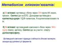 Метаболізм глікокон'югатів: а) О-зв'язані: вуглевод + білок через ОН-групи АК...