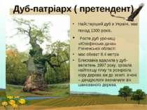 Дуб-патріарх ( претендент) Найстаріший дуб в Україні, має понад 1300 років. Р...