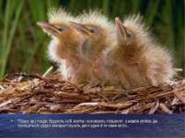Птахи, як і люди, будують собі житла і виховують пташенят, а мавпи сплять де ...