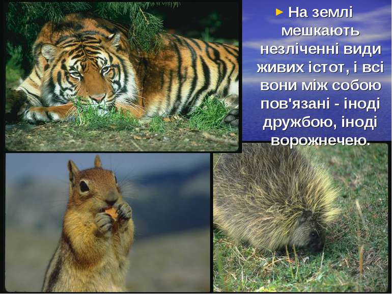 На землі мешкають незліченні види живих істот, і всі вони між собою пов'язані...