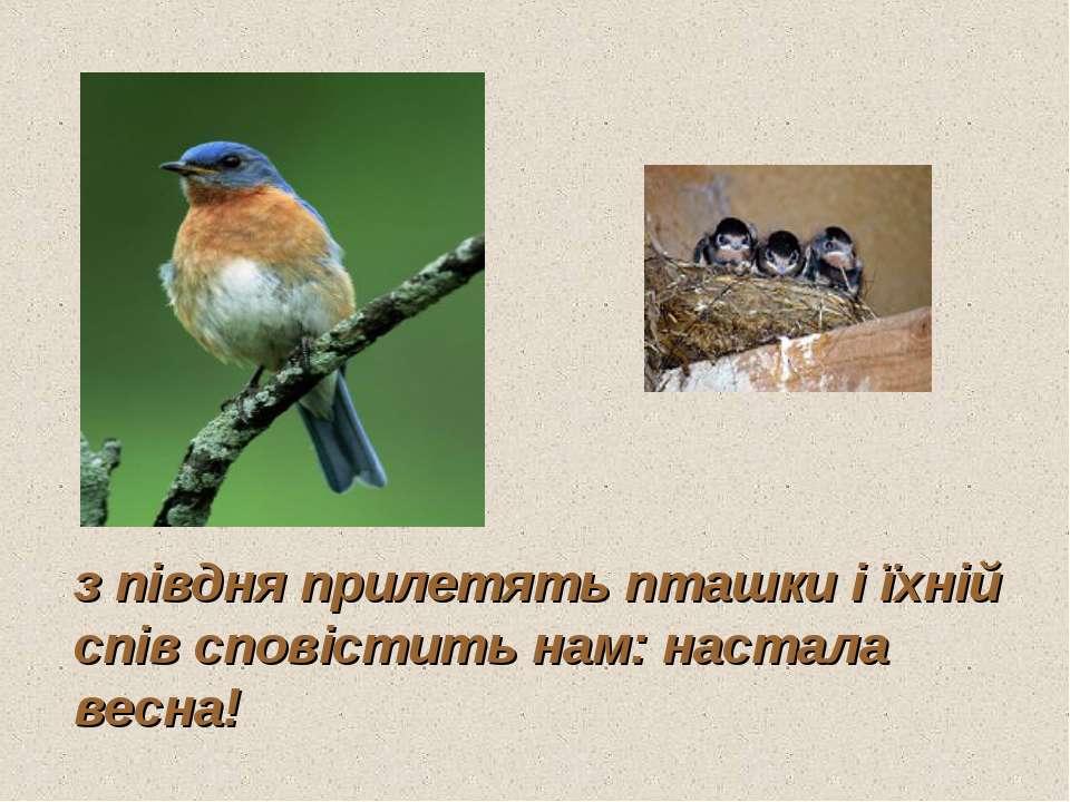з півдня прилетять пташки і їхній спів сповістить нам: настала весна!