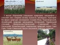 З метою збереження унікальних природних ландшафтів у степовій зоні створено в...