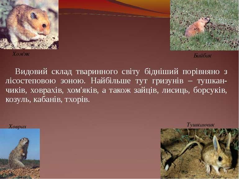 Видовий склад тваринного світу бідніший порівняно з лісостеповою зоною. Найбі...