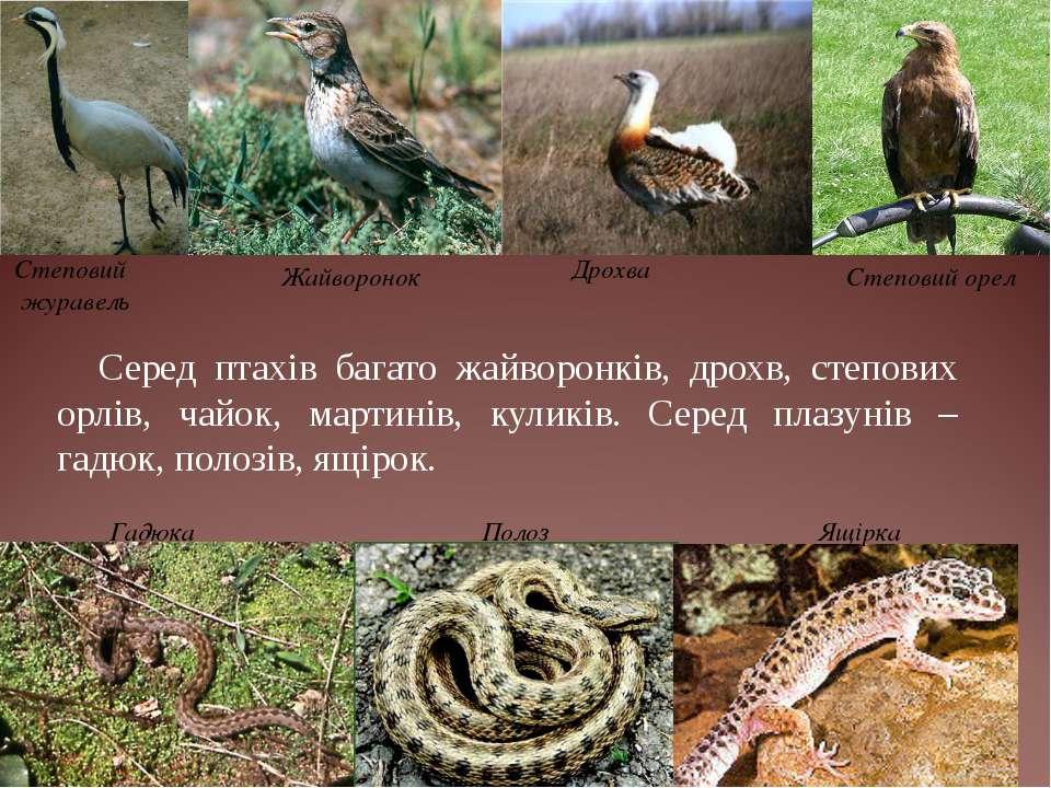 Серед птахів багато жайворонків, дрохв, степових орлів, чайок, мартинів, кули...