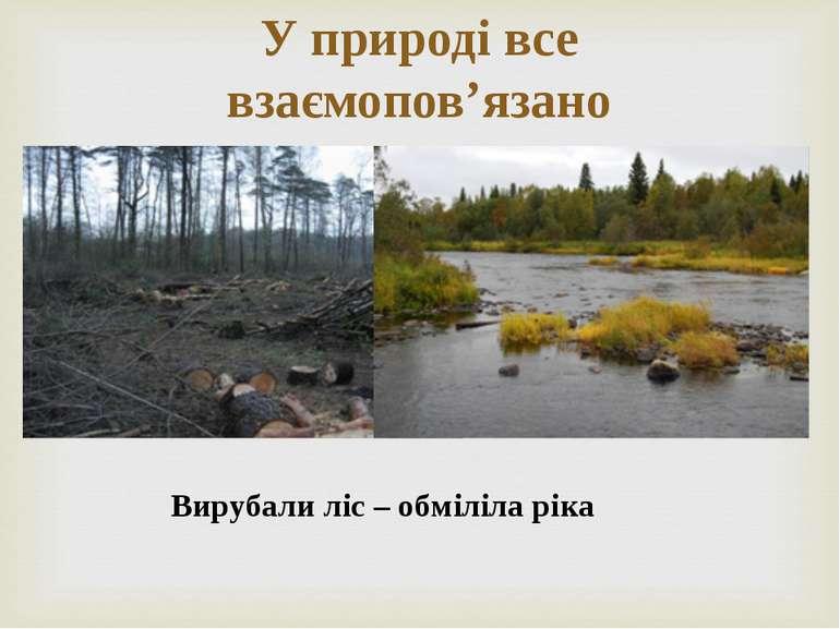 У природі все взаємопов'язано Вирубали ліс – обміліла ріка