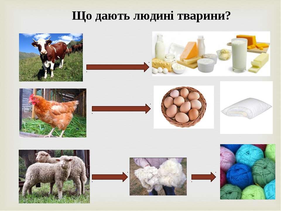 Що дають людині тварини?