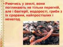Риючись у землі, вони поглинають не тільки перегній, але і бактерії, водорост...