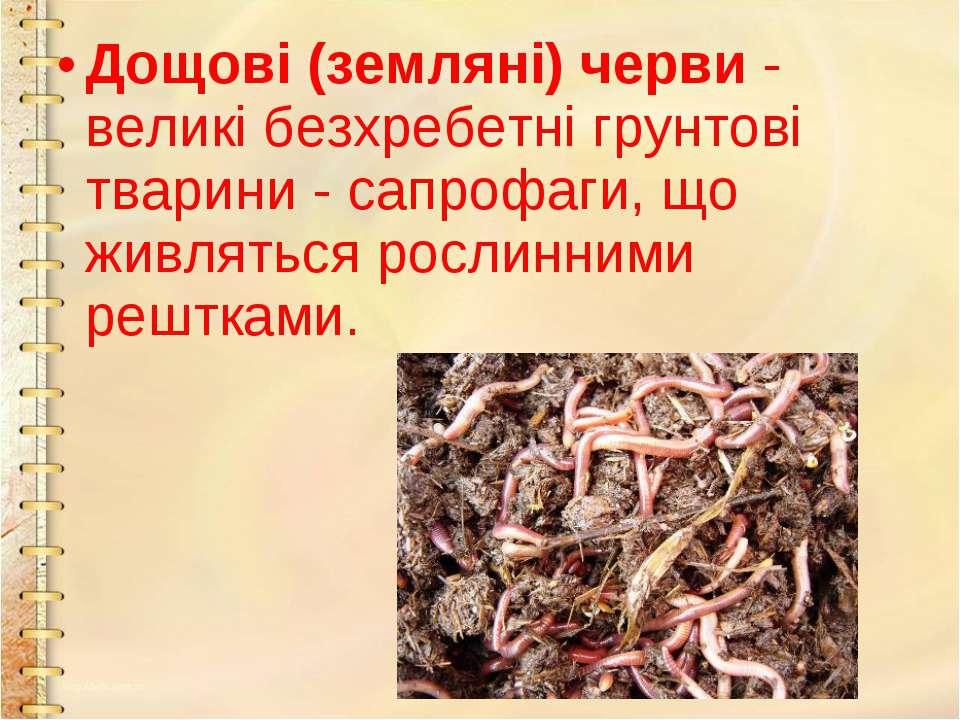 Дощові (земляні) черви- великі безхребетні грунтові тварини - сапрофаги, що ...