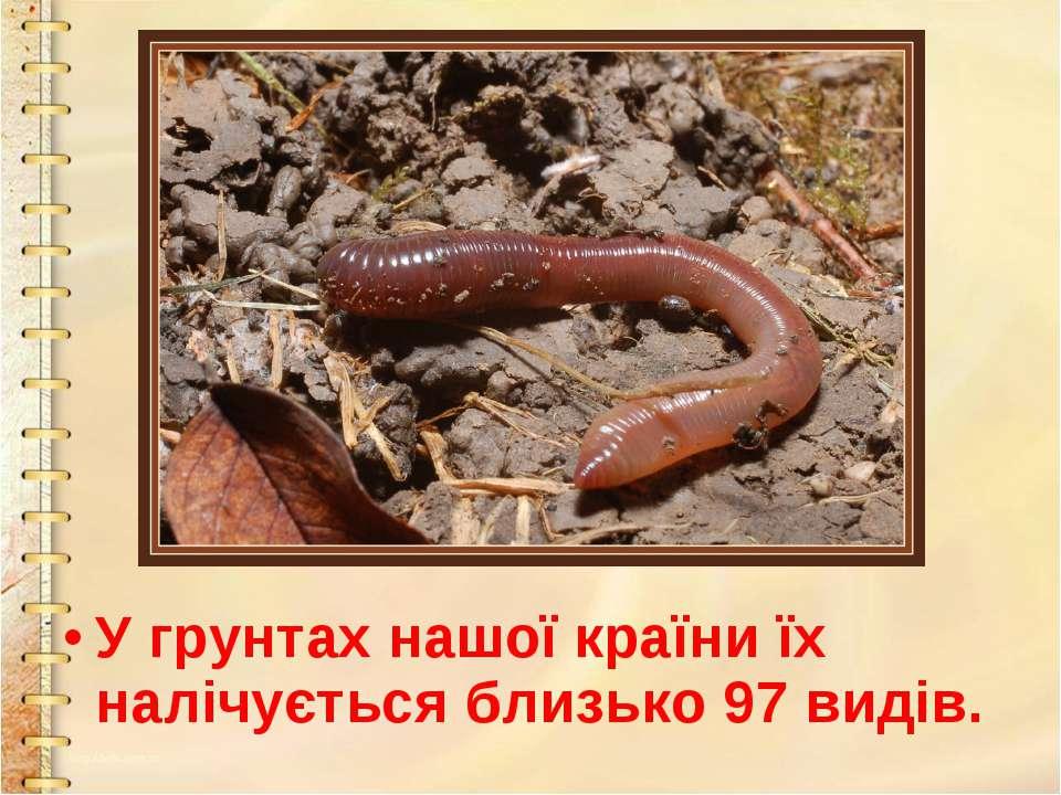 У грунтах нашої країни їх налічується близько 97 видів.