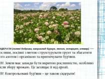 СИДЕРАТИ (зелені добрива, наприклад буркун, люпин, еспарцет, клевер) ― рослин...