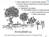 http://upload.wikimedia.org/wikipedia/commons/2/27/Forgard2-003.gif Високі фр...
