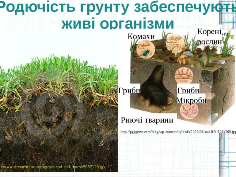 Родючість грунту забеспечують живі організми http://www.dreamstime.com/grass-...