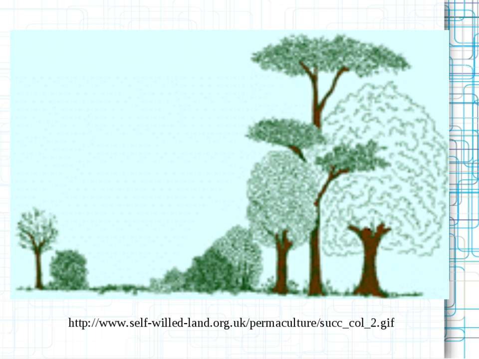 http://www.self-willed-land.org.uk/permaculture/succ_col_2.gif