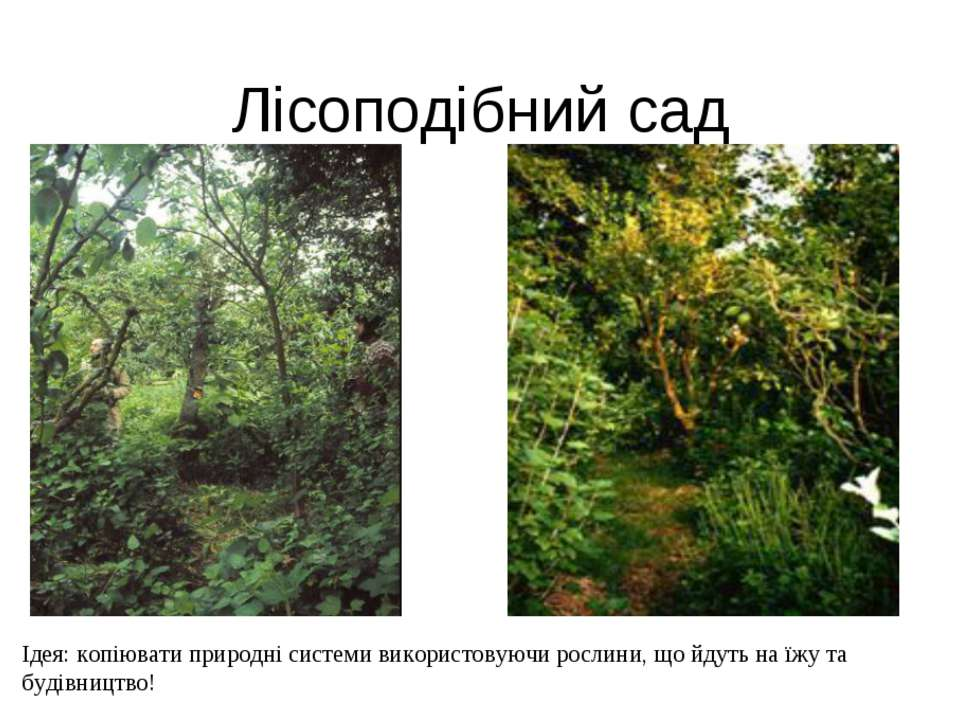 Лісоподібний сад Ідея: копіювати природні системи використовуючи рослини, що ...