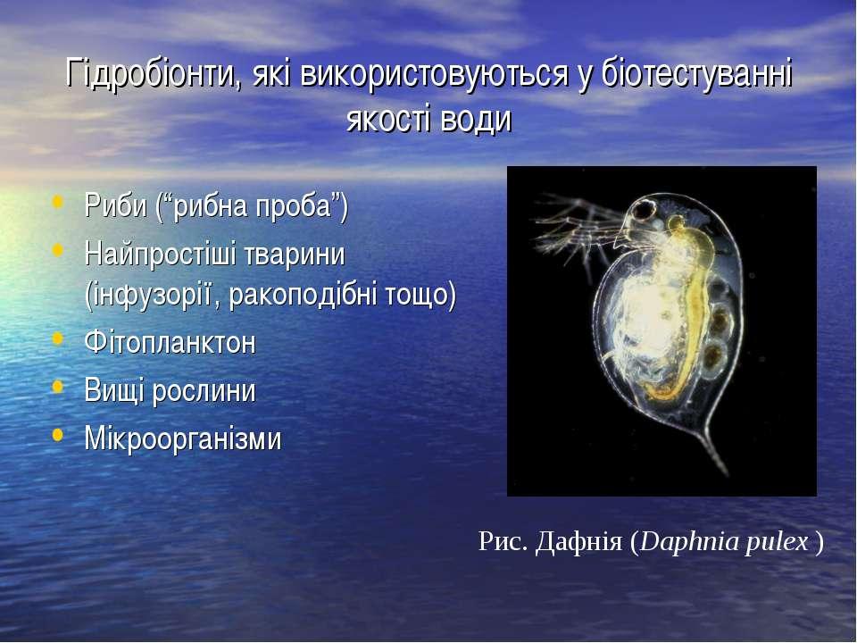 """Гідробіонти, які використовуються у біотестуванні якості води Риби (""""рибна пр..."""