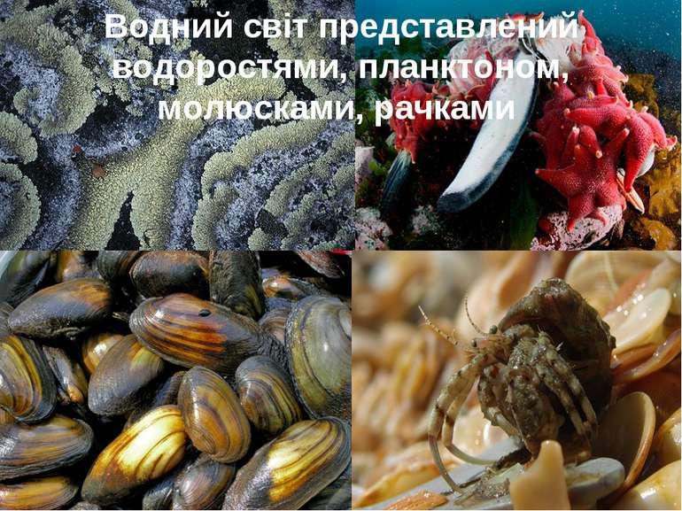 Водний світ представлений водоростями, планктоном, молюсками, рачками