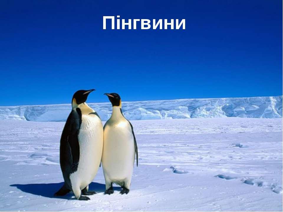Пінгвини