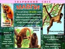 Т В А Р И Н Н И Й С В І Т Левовий тамарін Мавпа-ревун Павукоподібна мавпа Vid...