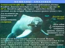 Амазонський дельфін М Е Ш К А Н Ц І А М А З О Н К И Амазонський дельфін інія ...