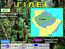 ФГП: приекваторіальна смуга в долині Амазонки Клімат: екваторіальний Ґрунти: ...