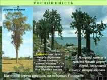 Р О С Л И Н Н И І С Т Ь 2 Кактусові дерева (опунція) на островах Галапагос В ...