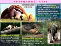 Т В А Р И Н Н И Й С В І Т Має найдовший язик серед тварин: 60 см. Під час їжі...