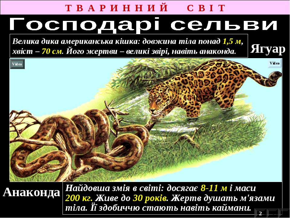 Анаконда Найдовша змія в світі: досягає 8-11 м і маси 200 кг. Живе до 30 рокі...