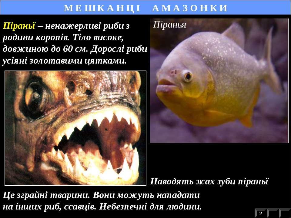 Наводять жах зуби піраньї М Е Ш К А Н Ц І А М А З О Н К И Це зграйні тварини....
