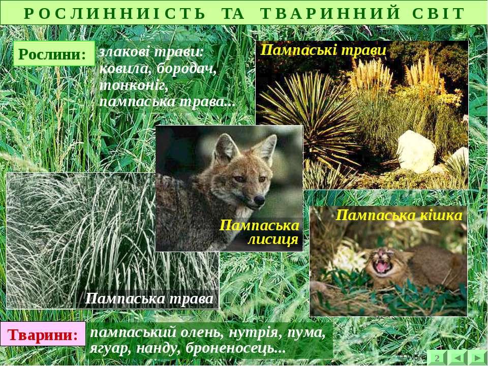 злакові трави: ковила, бородач, тонконіг, пампаська трава... Тварини: пампась...