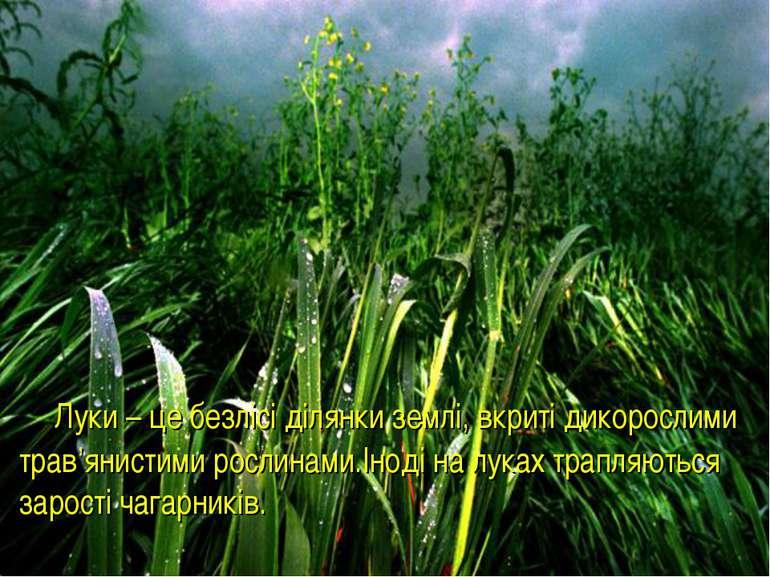 Луки – це безлісі ділянки землі, вкриті дикорослими трав'янистими рослинами.І...