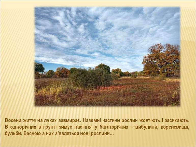 Восени життя на луках завмирає. Наземні частини рослин жовтіють і засихають. ...