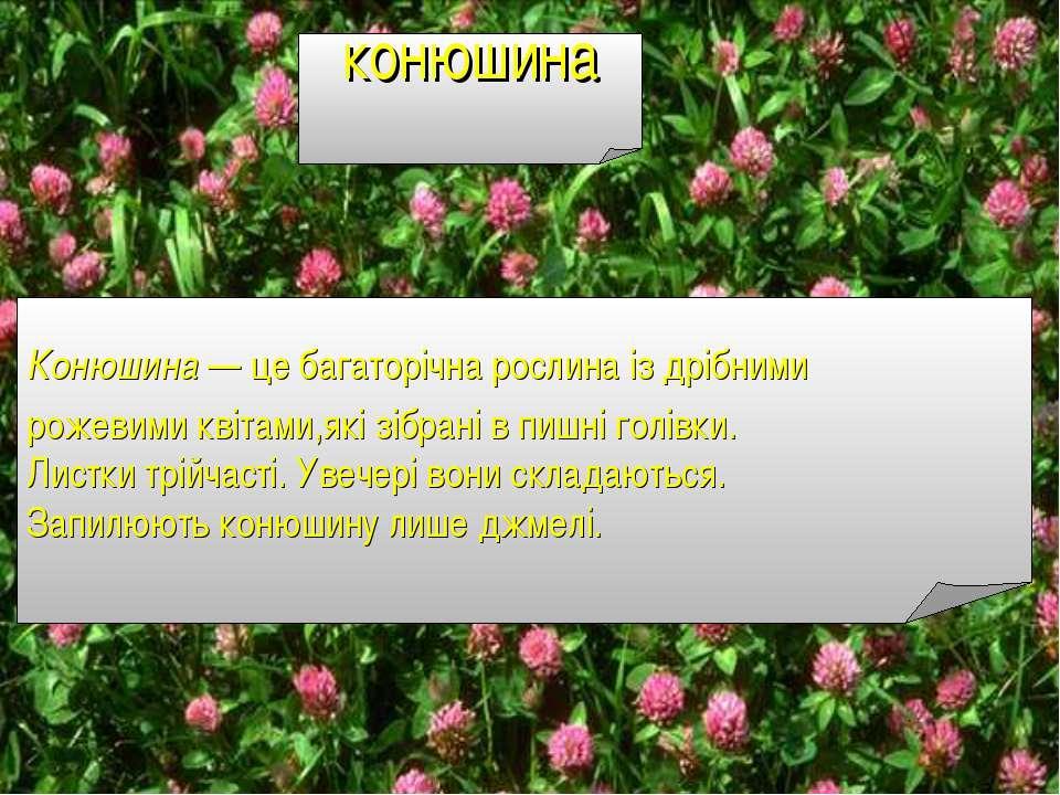 конюшина Конюшина — це багаторічна рослина із дрібними рожевими квітами,які з...