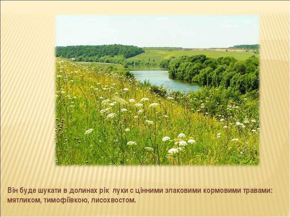 Він буде шукати в долинах рік луки с цінними злаковими кормовими травами: мят...