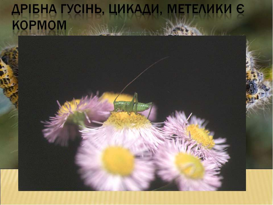 зеленого коника