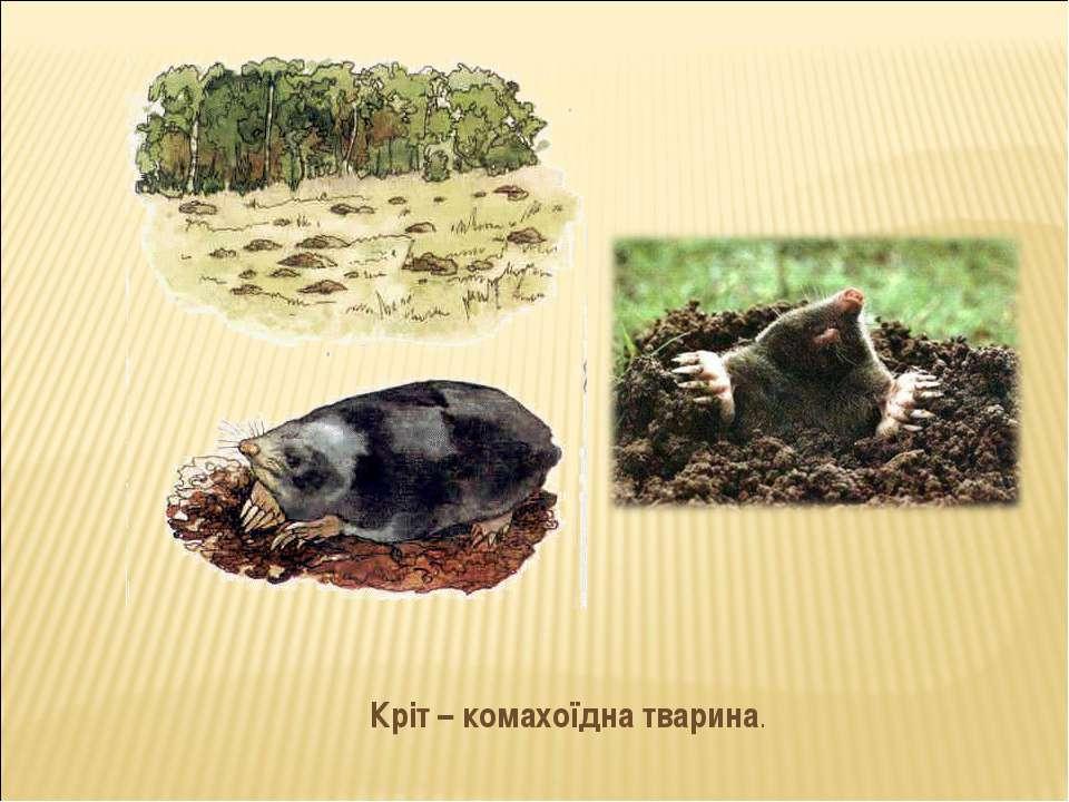 Кріт – комахоїдна тварина.