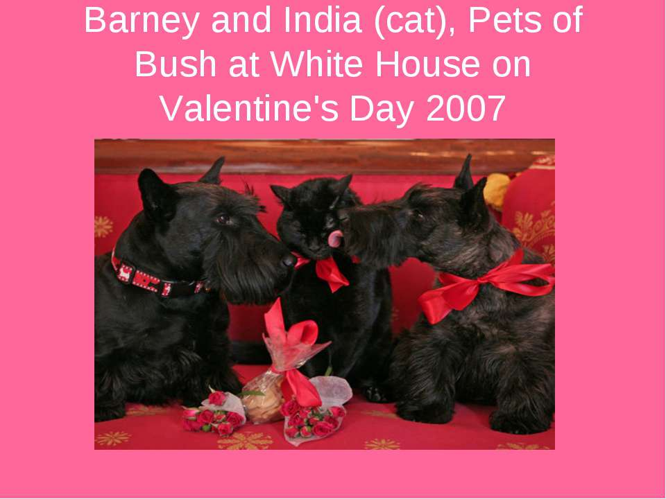 Barney and India (cat), Pets of Bush at White House on Valentine's Day 2007