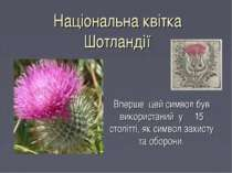 Національна квітка Шотландії Вперше цей символ був використаний у 15 столітті...