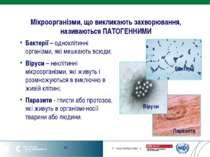 Мікроорганізми, що викликають захворювання, називаються ПАТОГЕННИМИ Бактерії ...