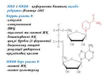 НАД і НАДФ - коферменти багатьох оксидо-редуктаз (близько 100) Беруть участь ...