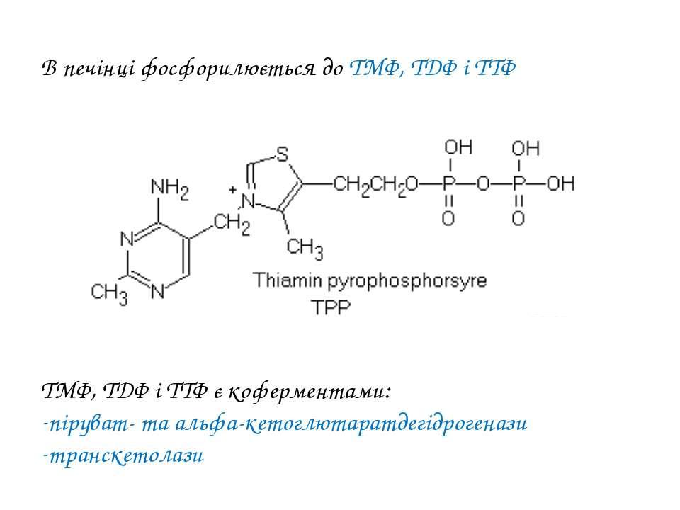 В печінці фосфорилюється до ТМФ, ТДФ і ТТФ ТМФ, ТДФ і ТТФ є коферментами: пір...