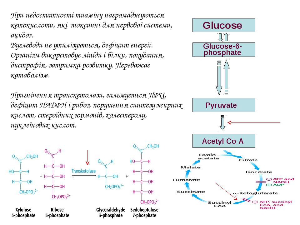 Glucose Glucose-6-phosphate Pyruvate Acetyl Co A При недостатності тиаміну на...