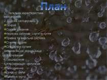 1. Загальна характеристика хеліцерових 2. Будова хеліцерових: Покрив Органи д...