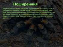 Поширенння Павукоподібні поширені повсюдно. Представники цього класу - одні з...