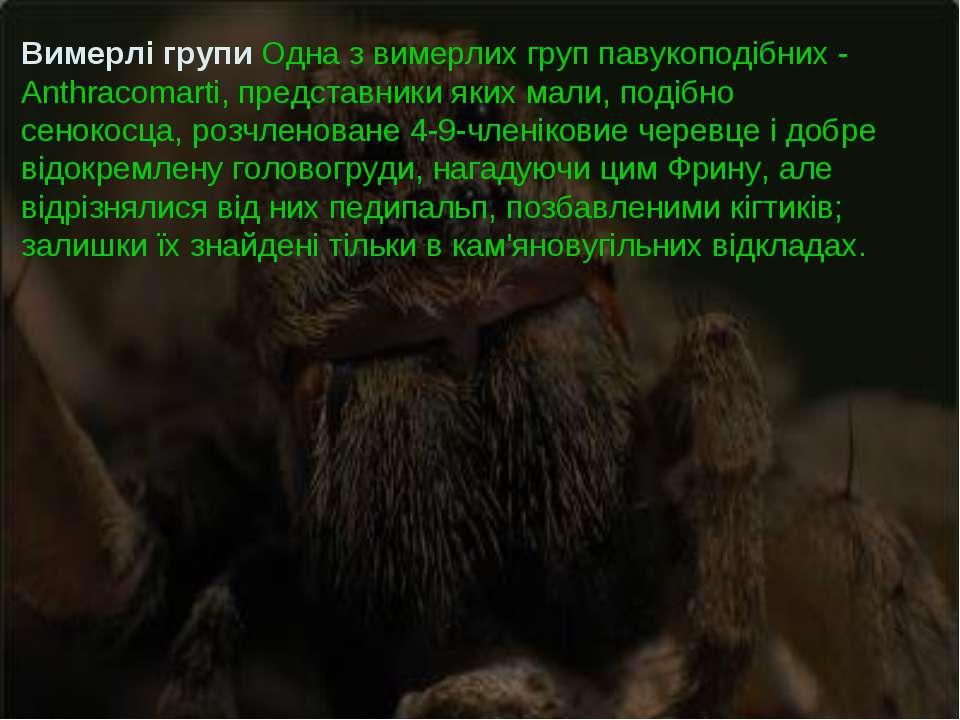 Вимерлі групи Одна з вимерлих груп павукоподібних - Anthracomarti, представни...