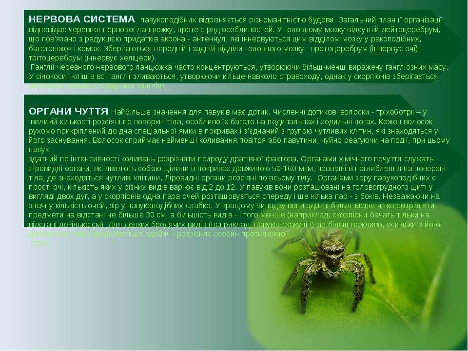 НЕРВОВА СИСТЕМА павукоподібних відрізняється різноманітністю будови. Загальни...