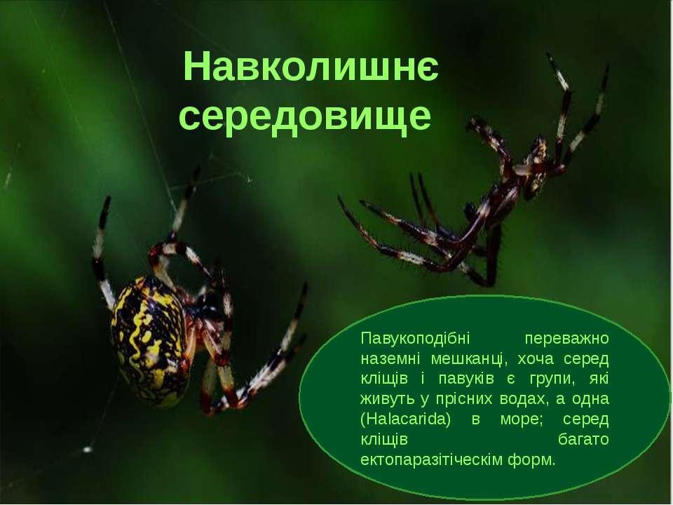 Навколишнє середовище Павукоподібні переважно наземні мешканці, хоча серед кл...