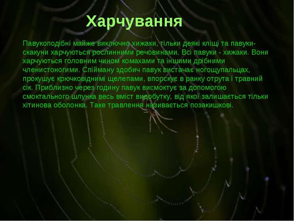 Павукоподібні майже виключно хижаки, тільки деякі кліщі та павуки-скакуни хар...