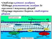 Стабілізує клітинні мембрани Підвищує резистентність мембран до окислення і т...